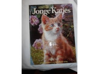 Huisdieren Snoezige jonge katjes – Angela Sayer
