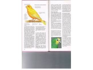 Huisdieren Handboek kooi- en volière vogels – David Alderton