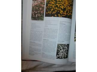 Flora en Fauna De mooiste vaste planten van A – Z