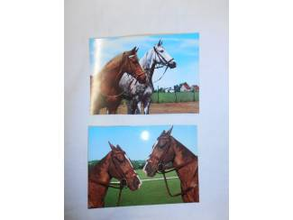 Ansichtkaarten | Dieren Verzameling paardenfoto's