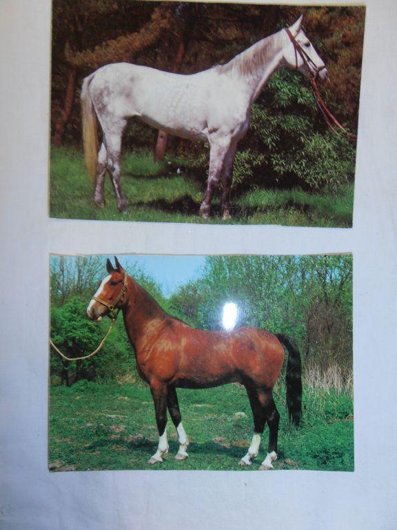 Verzameling paardenfoto's